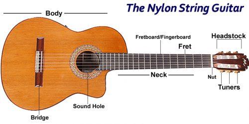 NYLON_ANATOMY